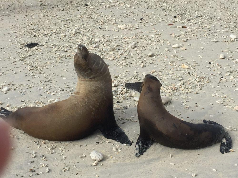 Galapagos Sea Lions by Jon Van de Pol
