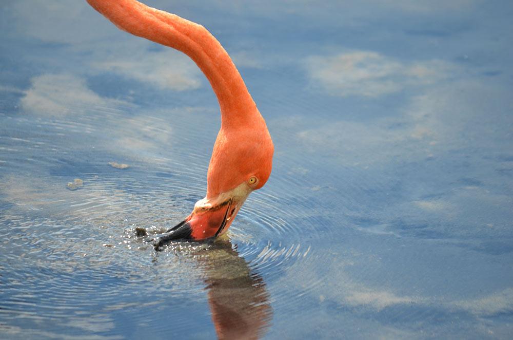 Flamingo by Richard Atkinson